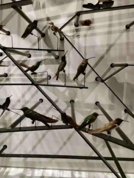 Détail accroche Oiseaux / Clade