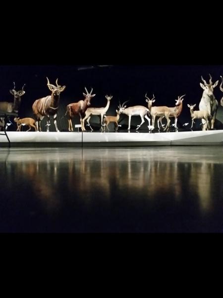 Différences c/o Antilope et Habitat